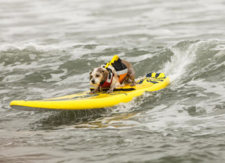 DOG SURFING EN FOLIE EN CALIFORNIE
